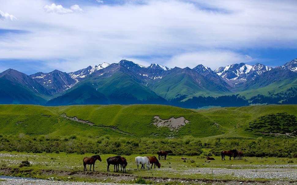 最美新疆,锦绣伊犁草原风光深度摄影团图片