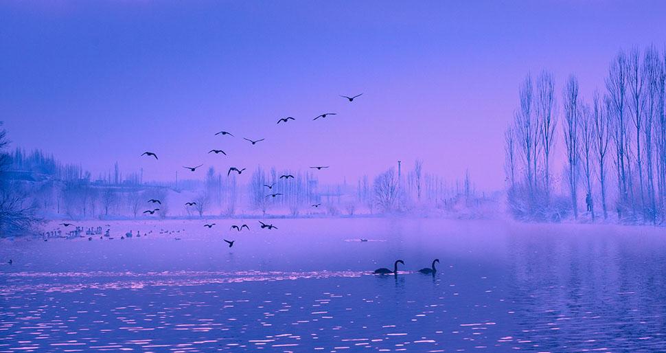晨曦天鹅湖-段德奇 摄   段德奇-13778405828 拷贝.jpg