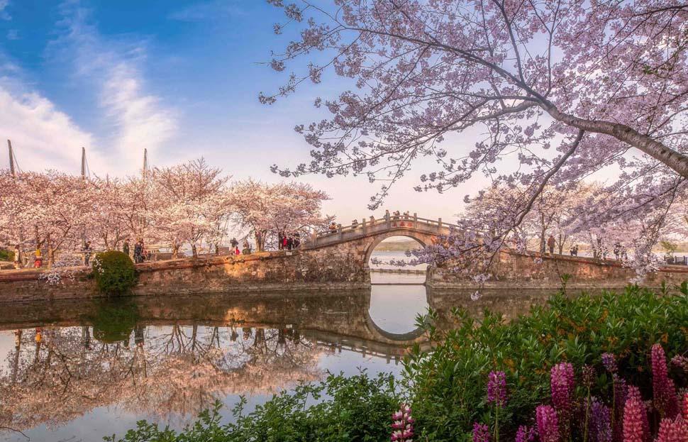 《0春到鼋头渚》朱敏 摄.jpg